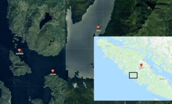 Canadá: 130 mil salmones muertos por FAN en centros de Cermaq