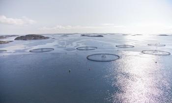 Foreslår mer effektiv regulering for oppdrett i sjø