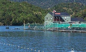 Fiscalizan escape de salmones en la región de Aysén