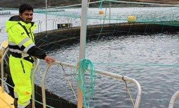 Har funnet ny variant av utbredt fiskevirus