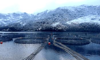 Salmonicultores de Magallanes crecerán 44% en nuevo período de siembras