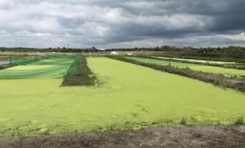 Peat bog fish farm does the spadework for sustainability