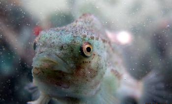 Ny innfallsvinkel til bedre fiskehelse