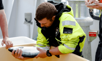 Productores europeos de salmón acelerarán uso de tecnologías disruptivas