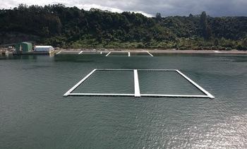 Chile: Ingresarán primeros peces a megajaula para acuicultura oceánica