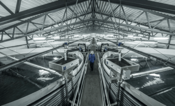 AKVA signs up to build 15,000t salmon plant in US