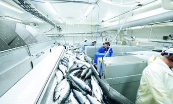 Exportaciones de salmón noruego comienzan el año con fuerte alza