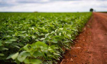 Tror ikke MDGs soya-forbud vil virke