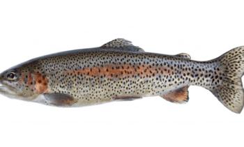 NGOs challenge Cooke trout farming plans