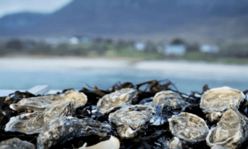 Irish oyster conference is a shell-out
