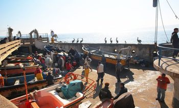 Pescadores de Concón diversificarán su actividad con cultivo de truchas