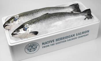 Salmonicultores escoceses retrasan cosechas por efecto de Coronavirus