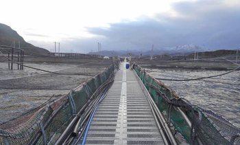 SMA evalúa posibles infracciones en escape de salmones de Cermaq Chile