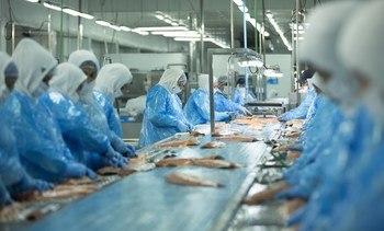 Salmones Austral comienza a dejar atrás el efecto pandemia con utilidades