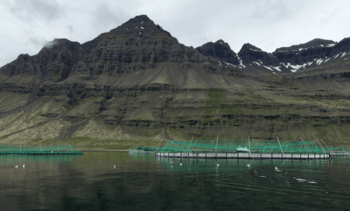 NTS vil eie 55,6 prosent av aksjene i Ice Fish Farm