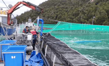 Toxic algal bloom kills 10,000 salmon in Chile