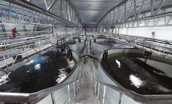 Cooke Aquaculture cancela proyecto RAS que había anunciado para Chile