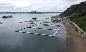 Chile: Proyecto de acuicultura oceánica evalúa pausar ejecución de prueba productiva