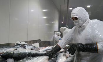 Corea aprueba a seis elaboradores chilenos de productos del mar tras inspección