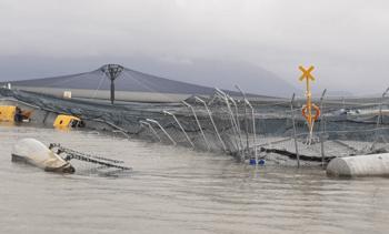 85,000 fish killed at wrecked Chilean salmon farm