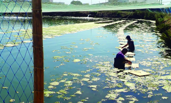 Turning the tide towards integrated aquaculture
