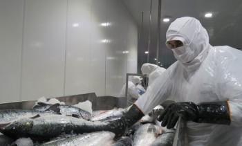 Los Lagos: Reforzarán acciones para enfrentar coronavirus en sectores productivos
