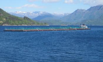 ILA-mistanken på Alsaker Fjordbruk-lokalitet er nå bekreftet