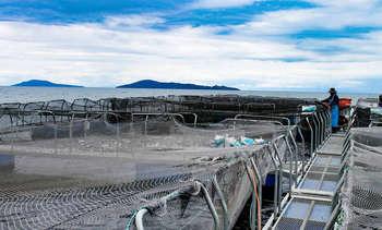 FAO: La acuicultura ha mejorado la seguridad alimentaria