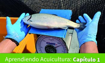 Comienza nuevo compendio sobre alimentación y nutrición en salmónidos