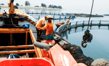 Singapore aquaculture institution signs up to sustainability