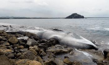 Salmonicultura podría ser clave en monitoreo de poblaciones de cetáceos