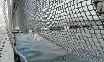 90,000 fish escape after vandalism at salmon farm
