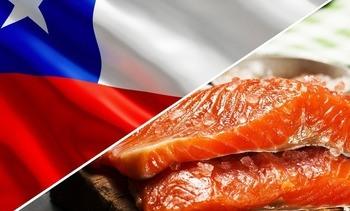 Primer semestre: Valor de envíos de salmón chileno disminuye en 11,5%