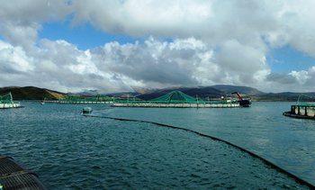 Irish aquaculture demands support and reform