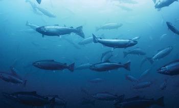 Experts outline aquaculture's progress