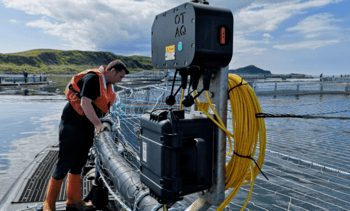 Salmon farmers to carry out seal scarer risk assessments