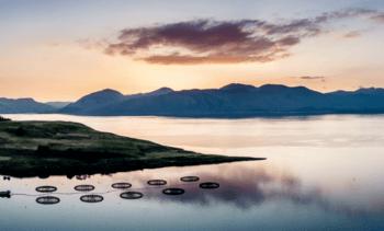 Scotland launches 'rapid response' grants for aquaculture innovators