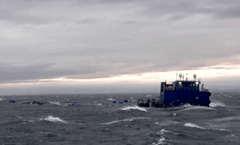 Sunkne laksemerder funnet på 300 meters dyp