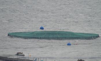 En Chile: Proyectos de salmonicultura oceánica muestran positivos resultados