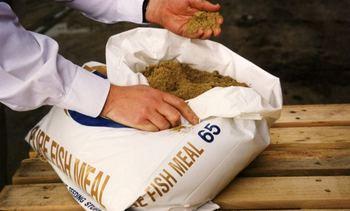 A junio: Producción mundial de harina y aceite de pescado disminuye en 7%