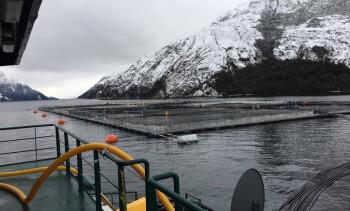 Proyecto Salmones Austral-Nova Austral es impactado por brote de ISA