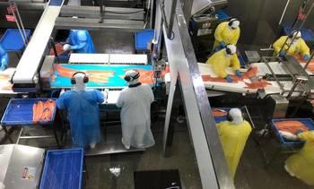 Salmonicultura opera a menor capacidad por cuarentena indefinida en Puerto Montt