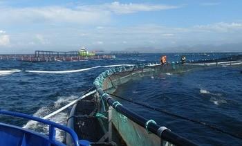 Eksponert havbruk: - Vi må ha et regelverk som sikrer fiskehelsen og biosikkerheten