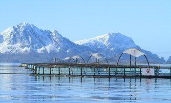 Productor de salmón es el primero en Noruega en recibir certificación BAP