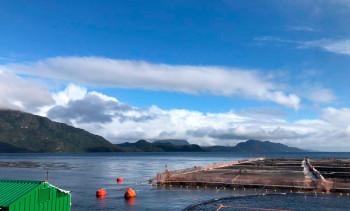 Salmones de Chile reporta cuatro trabajadores positivos a covid-19