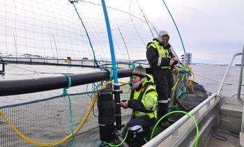 Presentan cámara hiperespectral para conteo automático de piojos de salmón