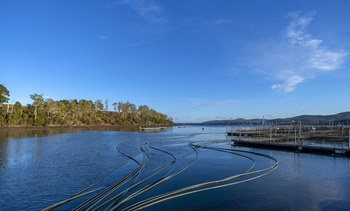 Breeding project Xelects 'climate proof' fish