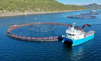 Lanzan innovadora valla eléctrica para inactivar larvas de piojos de salmón