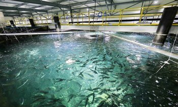 Plataforma digital wherEX apoya construcción de piscicultura de Salmones Austral