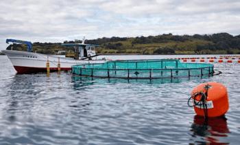 Tecnología chilena de balsas jaulas sumergibles soporta tifones en Japón